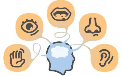 El sistema sensorial nos prepara para la vida